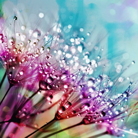 nature flowers in blues, purples, and pink with water droplets