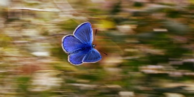 blue butterfly against a blurred background