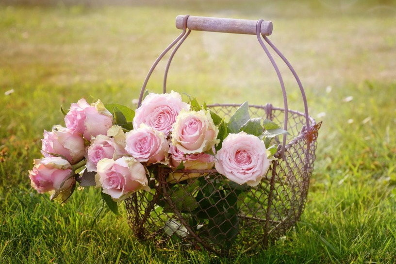 pink roses in wire basket with wood handle sitting in grass