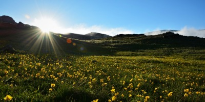 Sunlight streaming over mountains upon a meadow filled with yellow flowers