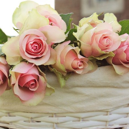 Lovely cream and pink roses laying in a cream muslin fabric inside a white wicker basket with handles.