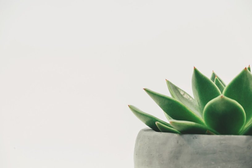 simple green succulent in stone pot offset against white background